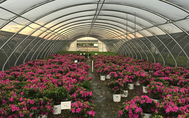 Nature Hills Brings E Commerce 2 0 To The Gardening Industry