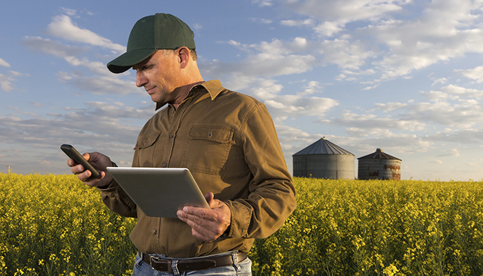 A royalty free image from the farming industry of a farm worker using a computer and smart phone